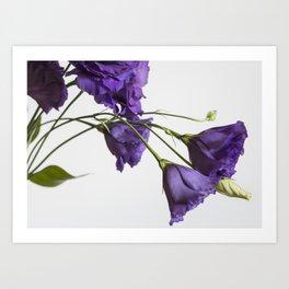Purple Lisanthus Flowers #2 Art Print