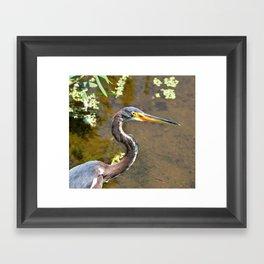 Tri-Color Heron Portrait Framed Art Print