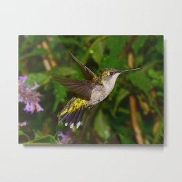 Hovering Hummingbird 41 Metal Print