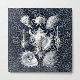 Ernst Haeckel Sea Shells Metal Print