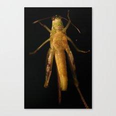 Grasshopper in the Dark Canvas Print