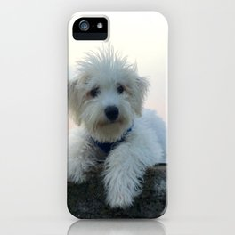 Teddy At Sunset iPhone Case