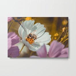 Bee Sides. Photograph Metal Print