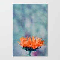 sunflower Canvas Prints featuring sunflower by Claudia Drossert