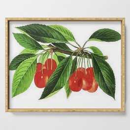 Red Cherries Vector on White Background Serving Tray