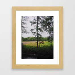 Irish Cows Framed Art Print