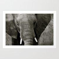 Elephant I (B&W) Art Print