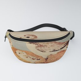 Belted Piping Plover4 Fanny Pack