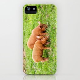 The Lost Gardens of Heligan - Pigglets iPhone Case