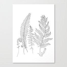 Minimal Line Art Fern Leaves Canvas Print