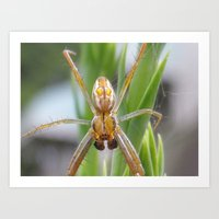 spider Art Prints featuring spider by Dottie