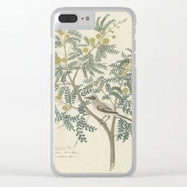 Robert Jacob Gordon - Acacia karroo Hayne or Vachellia karroo - 1777-1786 Clear iPhone Case