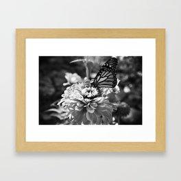 Butterfly on Flower Framed Art Print