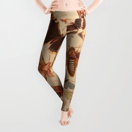 Vintage insects 1 Leggings