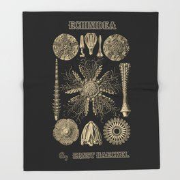 """""""Echinidea"""" from """"Art Forms of Nature"""" by Ernst Haeckel Throw Blanket"""