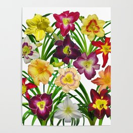 Display of daylilies I Poster