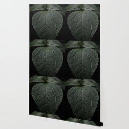 Botanical Still Life Photography Drops On Leaf Wallpaper