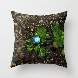 Persian Speedwell 3 Throw Pillow
