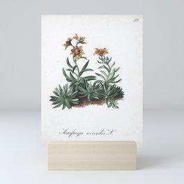 Flower saxifraga aizoides1 Mini Art Print