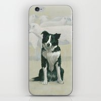 border collie iPhone & iPod Skins featuring border collie by phil art guy
