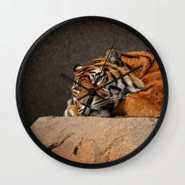 Resting Sumatran Tiger Wall Clock