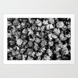 Shattered Shells Art Print