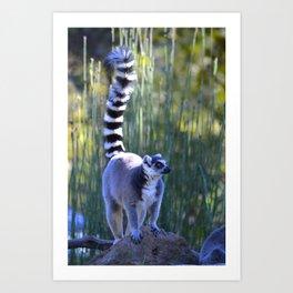 look tall Art Print