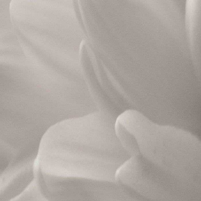 Monochrome chrysanthemum close-up Leggings