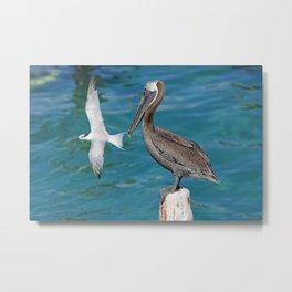 Pelican and Tern Metal Print