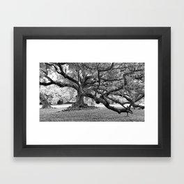 Tree of Life The De Bore Oak 1740 Framed Art Print