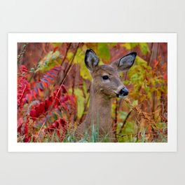 """""""Deer In The Fall Foliage"""" by S. Michael Art Print"""