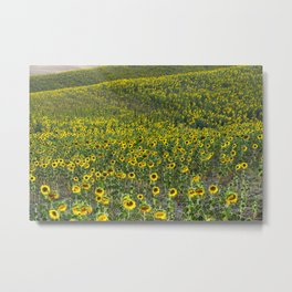 """Sunflowers"". Hills.  Fields... Metal Print"