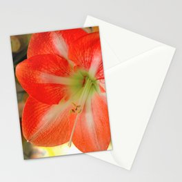 Spring has Sprung! Stationery Cards