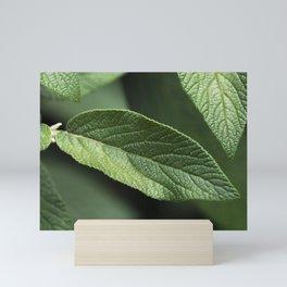 Sage Leaf Mini Art Print