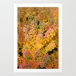 Colorful leaves Art Print