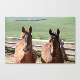 Horse Friends Photography Print Canvas Print