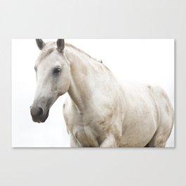 White Horse Photograph Canvas Print