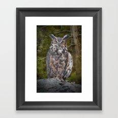 Portrait of a Great Horned Owl Framed Art Print