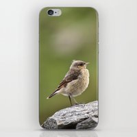 sparrow iPhone & iPod Skins featuring Sparrow by Distilled Designs
