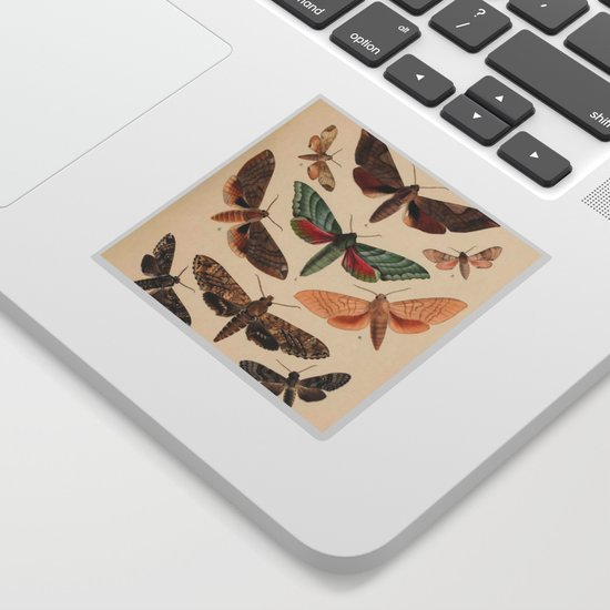 Vintage Natural History Moths by bluespecsstudio