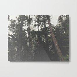 Woods 1 Metal Print
