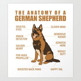 German Shepherd Anatomy Art Print