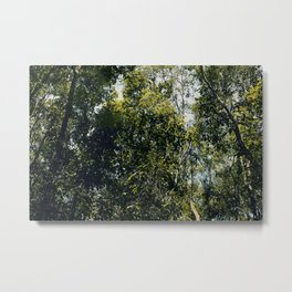 Up At The Trees Metal Print
