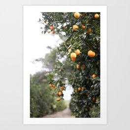 Ojai Oranges Art Print