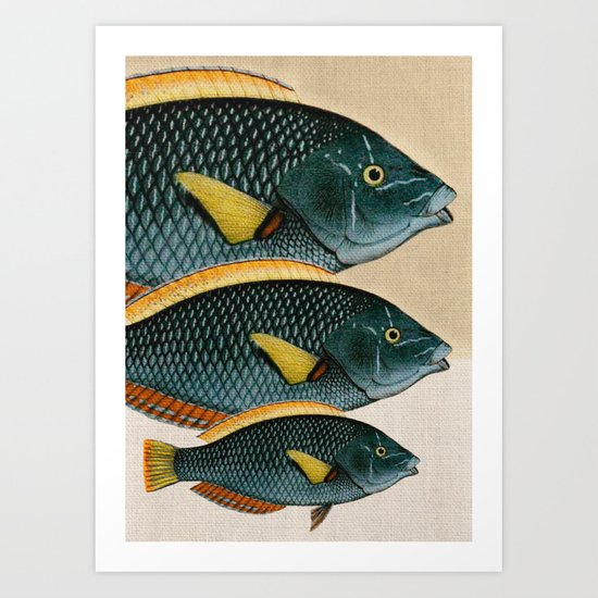 Fish Classic Designs 10 Art Print