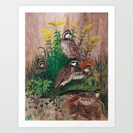 Covey of quail Art Print