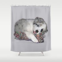 border collie Shower Curtains featuring Collie Puppy, blue merle by HelenMacNee