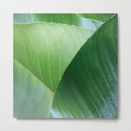 Big Banana Leaves green Metal Print