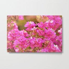Pretty Pink Petals Metal Print
