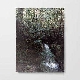 INTO THE WILD IX / Big Basin, California Metal Print